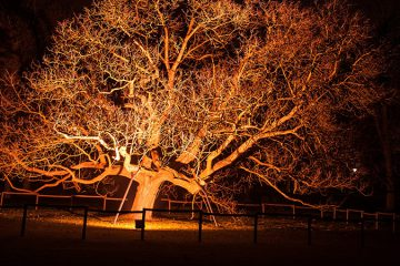 Tree Lighting Installation