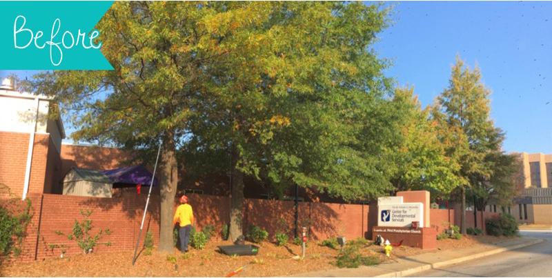 Tree Pruning Before